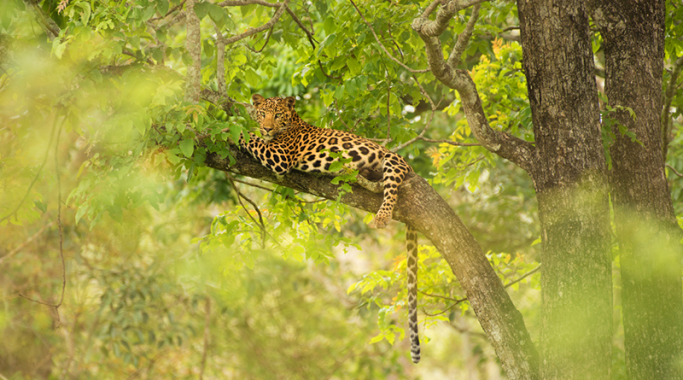 India's Wild_Karnataka
